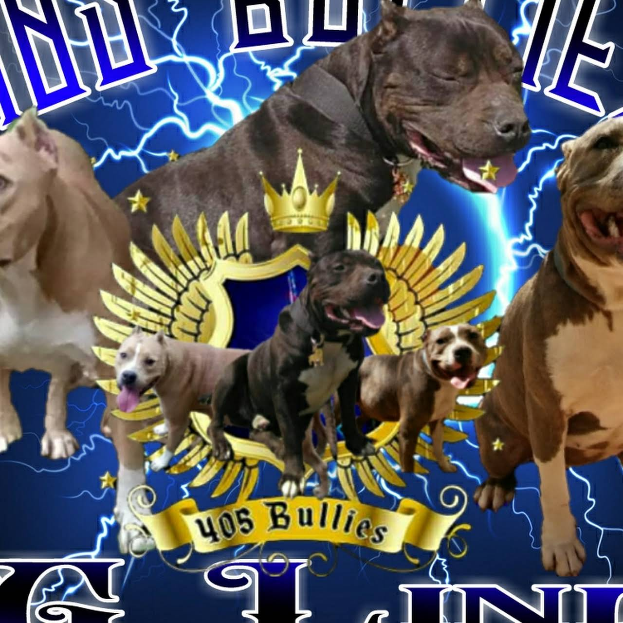 405 Bullies Kennels - American Bully Breeder in Oklahoma City