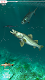 screenshot of Rapala Fishing - Daily Catch