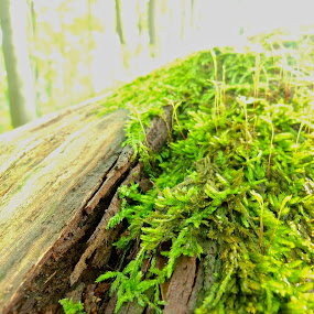 A Natural Morning by Mali Lubic - Nature Up Close Other plants ( nature, green, plants, moss, trees )