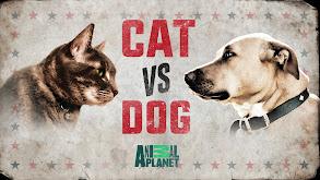 Cat vs. Dog thumbnail