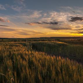 Fields of Love by Octavian Oprea - Landscapes Sunsets & Sunrises ( love, field, blue, green, sunset,  )