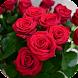 باقات الورد رائعة - Androidアプリ