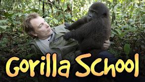 Gorilla School thumbnail