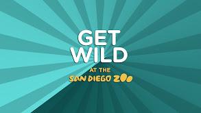 Get Wild thumbnail