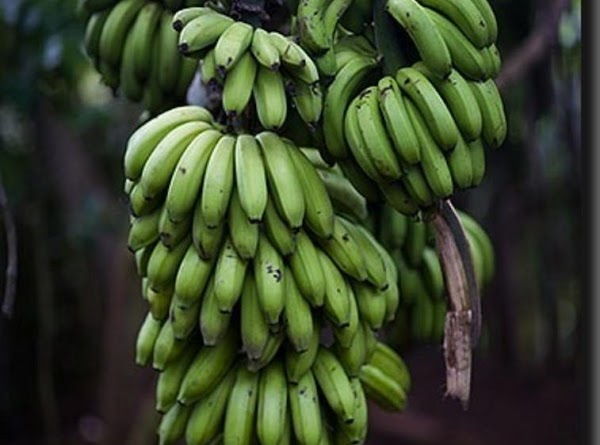 Fill a bowl with hot water. Cut the ends of the green bananas and...