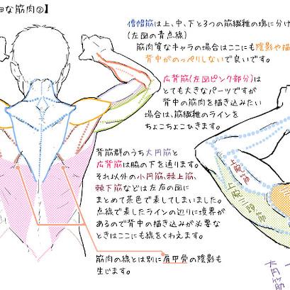 人体イラスト -男性編-(コミックイラスト体験)