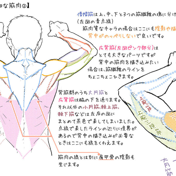 (28)人体イラスト【男性編】