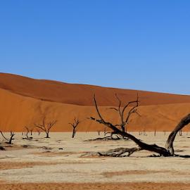 dead trees by Nico Kranenburg - Landscapes Deserts ( desert, trees, deadvlei, namibia,  )