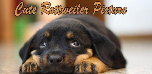 Cute Rottweiler Picture Aplicații Pe Google Play