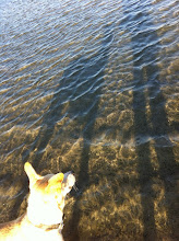 Photo: Enjoying the end of the day with a great companion