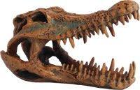 Krokodilskalle mörk