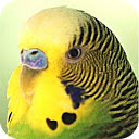 HD wallpapers for a new tab Parrots