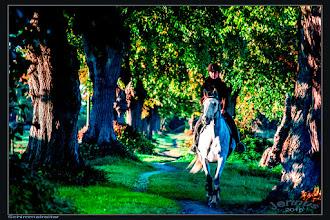 Photo: Es war im dritten Jahrzehnt unseres Jahrhunderts, an einem Oktobernachmittag .... Jetzt aber kam auf dem Deiche etwas gegen mich heran; ich hörte nichts; aber immer deutlicher, wenn der halbe Mond ein karges Licht herabließ, glaubte ich eine dunkle Gestalt zu erkennen, und bald, da sie näher kam, sah ich es, sie saß auf einem Pferde, einem hochbeinigen hageren Schimmel; ein dunkler Mantel flatterte um ihre Schultern, und im Vorbeifliegen sahen mich zwei brennende Augen aus einem bleichen Antlitz an. Wer war das? Was wollte der? – Und jetzt fiel mir bei, ich hatte keinen Hufschlag, kein Keuchen des Pferdes vernommen; und Roß und Reiter waren doch hart an mir vorbeigefahren!