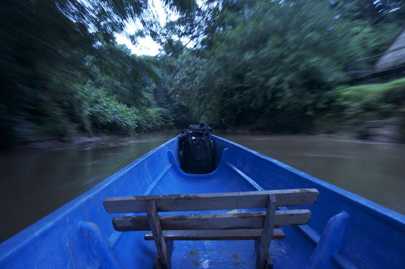 Reserva Cuybeno, Ecuador. di Cristhian Raimondi