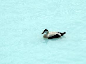 Photo: Błękitna Laguna dla wszystkich