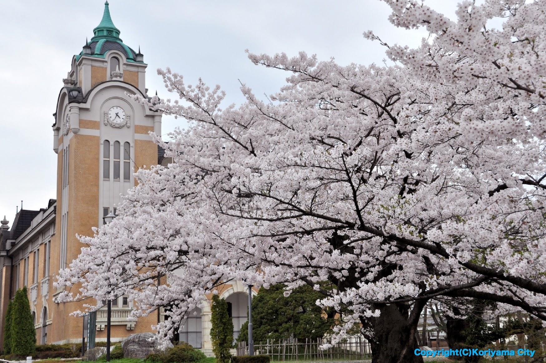 郡山市の4月開催イベント | お花見 桜祭り お出かけ