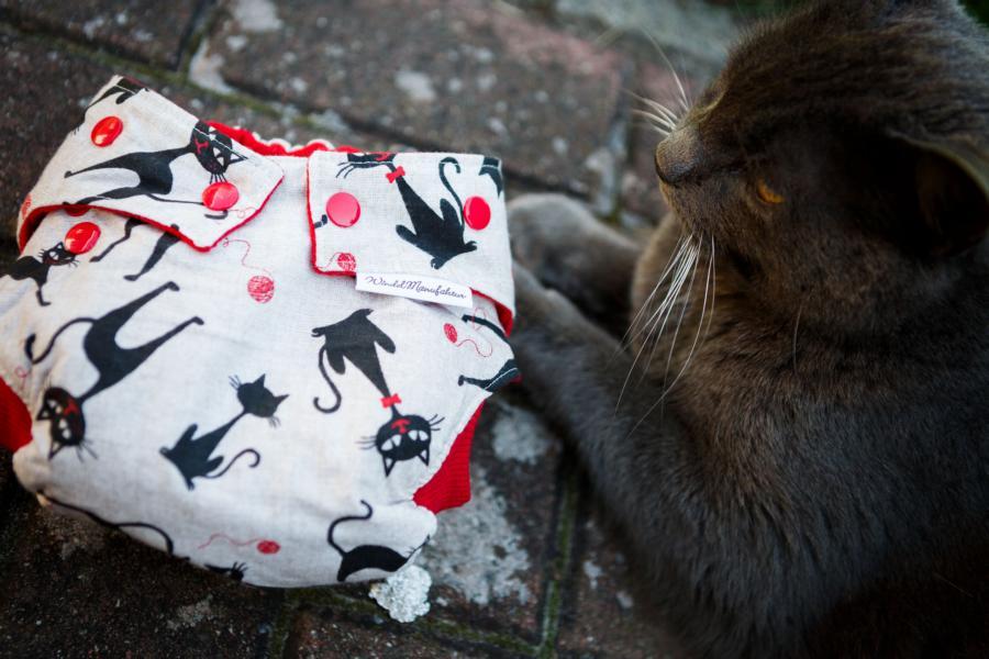 Herzogfotografie - Le Chat Noir mit Katze