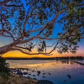 Granite Island by Nicole Rix - Landscapes Sunsets & Sunrises ( sky, tree, sunset, outdoor, seascape, jetty )