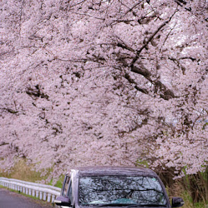 シエンタ NCP81Gのカスタム事例画像 N美さんの2020年04月04日19:01の投稿