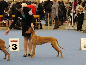 Photo: Aava 9 months winning BB4 at Finnish Winner Show
