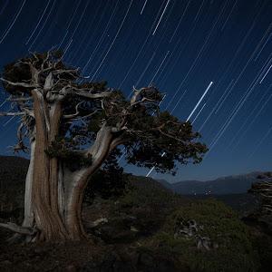 Susie Tree Trails Short.jpg