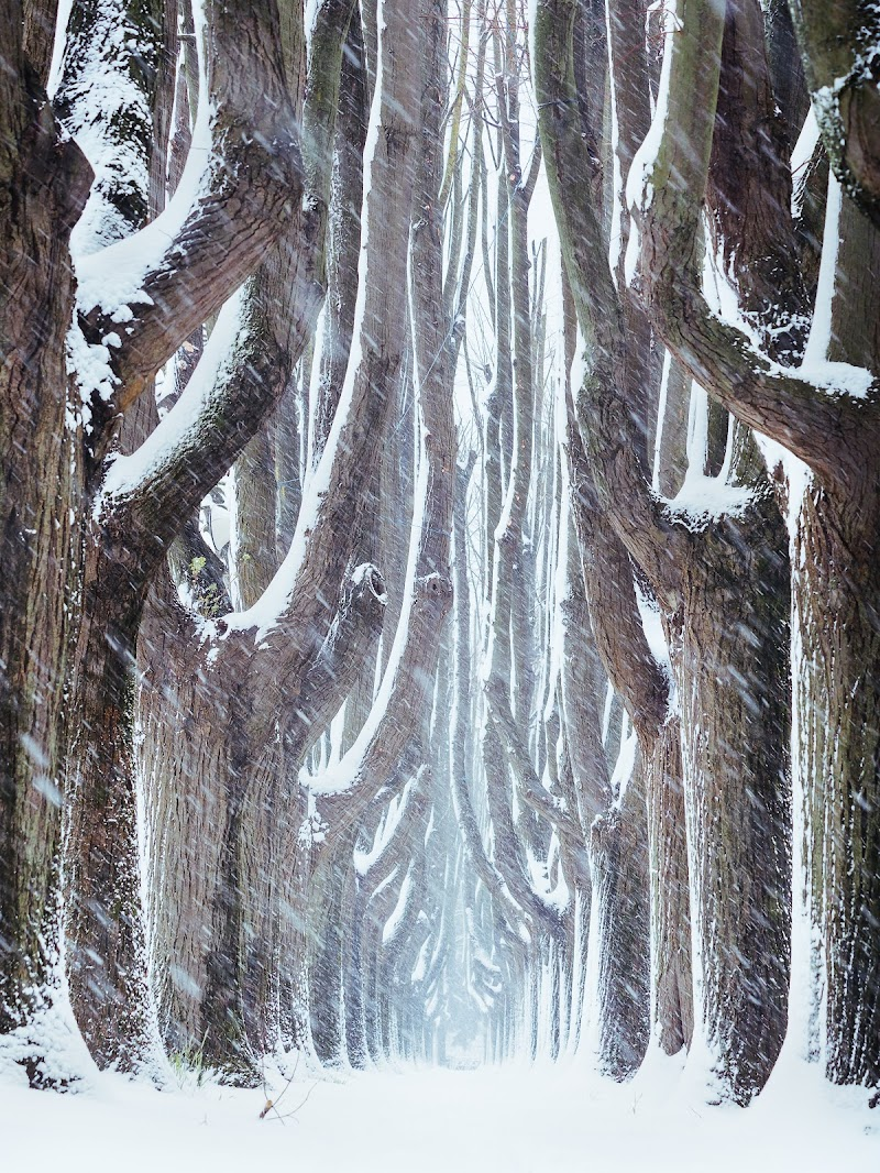 La neve marzolina... di maxlazzi