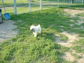 Photo: Niko en su primer parque canino... jejeje... sin embargo, le dejamos el bocal por si a las moscas