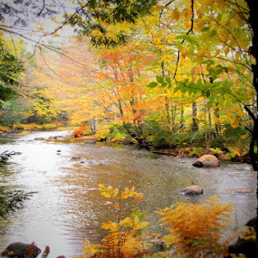 by Lena Arkell - Landscapes Waterscapes ( water, canada, nova scotia, autumn, fall, trees, october, river,  )