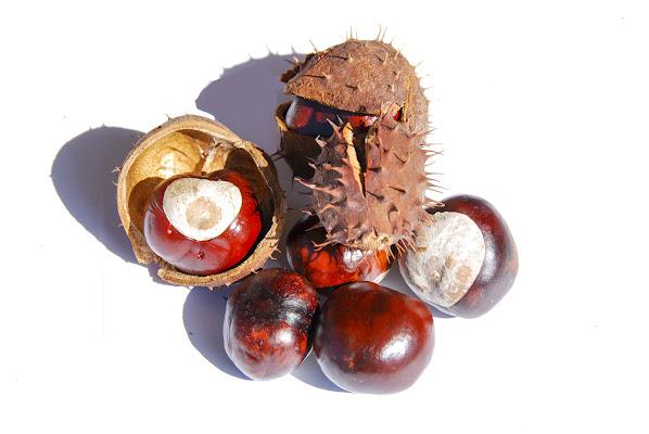 Il frutto simbolo dell'autunno di linobeltrame