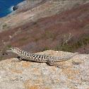 Ruin lizard