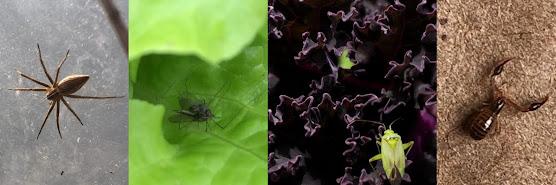 Curso Online: Insectos Auxiliares - Os melhores Amigos do Agricultor Biológico – Junho 2020