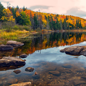 Reflections of Autumn by Carol Ward - Landscapes Waterscapes ( water, stream, fall colors, autumn, adirondack mountains, fall, trees, ny, rocks,  )