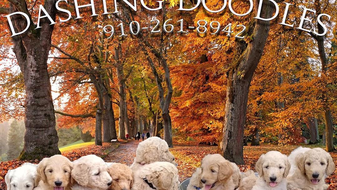 Dashing Doodles Goldendoodles Puppies Goldendoodle Dog