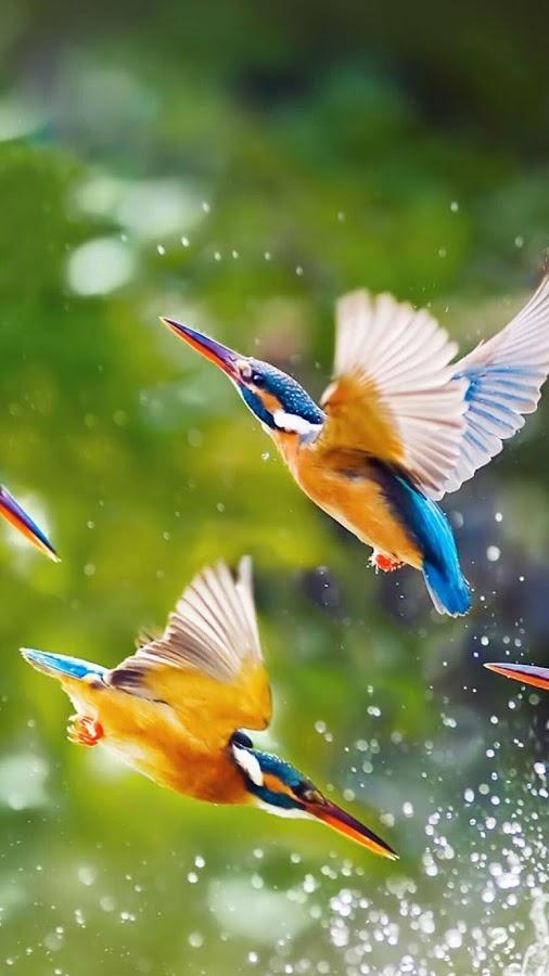 تطبيق يقدم صور طيور خلابة جدا لجعلها خلفية لجهازك و بسهولة فائقة f_SKYSNIIL1ZAWqK4GEX