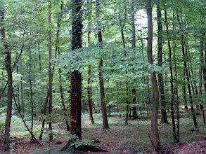 Photo: Bosque de Haguenau. Alsacia ( Francia) http://www.viajesenfamilia.it/Alsacia.htm