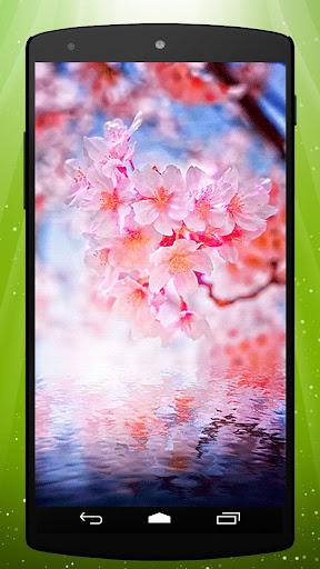 Pink Sakura Live Wallpaper