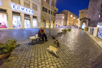 Photo: Man feeding cats neat Largo Argentina, Rome. We almost adopted Stella from this Cat Sanctuary.