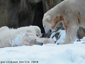 Photo: Neujahrstag 2010 - Morgendliche Begruessung zwischen Knut und Gianna :-)