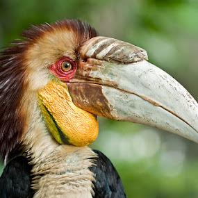 MOHAWK! by Lessy Sebastian - Animals Birds