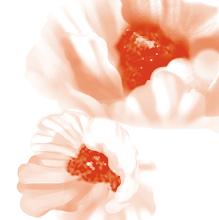 Photo: Flower study in Adobe Photoshop