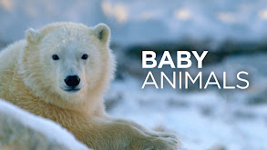 Baby Animals thumbnail