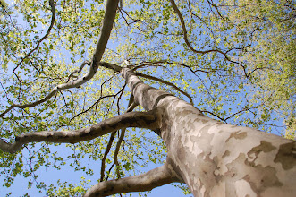 Photo: 12 ... Looking up ... in that same park near where I work