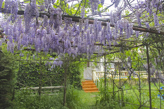 Photo: Wisteria covers the car parking area, and smells wonderful for weeks on end.