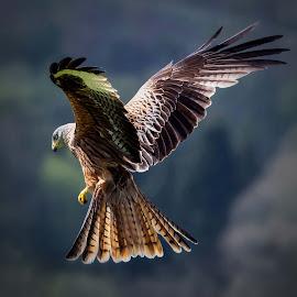 by Stephen Crawford - Animals Birds (  )