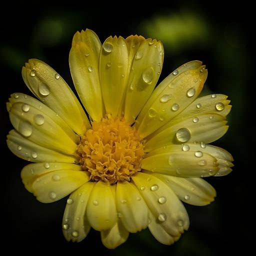 App Insights Rain Flower Wallpaper Apptopia