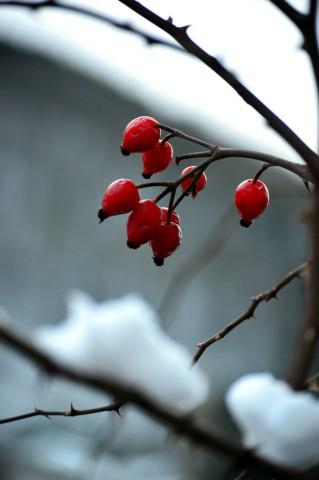 Rosso tra la neve di Alina Bertolone