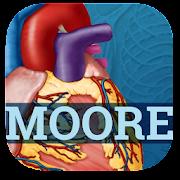 USMLE Clinical Anatomy Flashcards