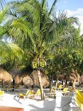 Photo: Palm trees at the iberostar