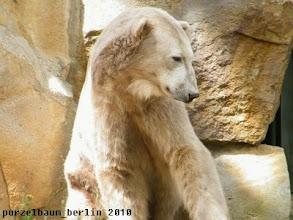 Photo: Sollte Knut jetzt etwa wach werden ?