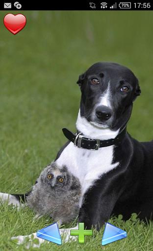 狗和貓頭鷹。最好的